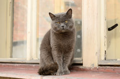 Katze auf dem Windowsill Stockfoto
