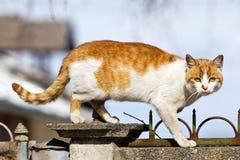 Katze auf dem Zaun Lizenzfreies Stockbild