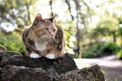 Katze auf den Felsen Stockbilder