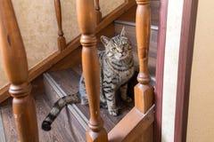 Katze auf den Schritten Lizenzfreies Stockbild