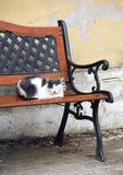 Katze auf der Bank Stockfotos