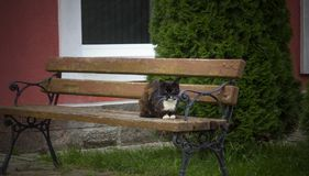 Katze auf der Bank lizenzfreies stockbild