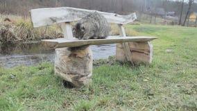 Katze auf der Bank in Litauen-Dorf stock footage
