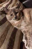 Katze auf der Couch Stockfoto