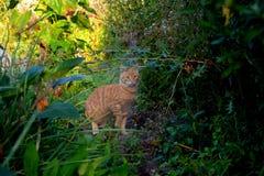 Katze auf der Jagd Stockfoto