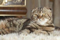 Katze auf der Matte Lizenzfreie Stockfotos