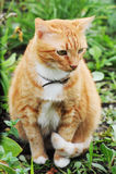 Katze auf der Natur Stockbild