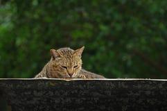 Katze auf der Oberseite, die unten aufpasst Stockfotos