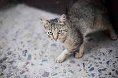 Katze auf der Straße Lizenzfreie Stockbilder