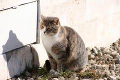 Katze auf der Straße Lizenzfreies Stockbild