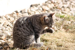 Katze auf der Straße Lizenzfreie Stockfotografie