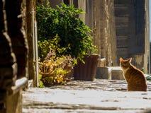 Katze auf der Straße Lizenzfreie Stockfotos