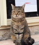 Katze auf der Straße, auf der Pflasterung Lizenzfreies Stockfoto