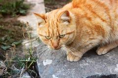 Katze auf der Stra?e lizenzfreie stockbilder
