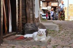 Katze auf der Türstufe Lizenzfreies Stockfoto