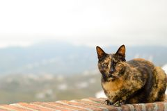 Katze auf der Terrasse stockfotografie