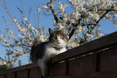 Katze auf der Wand Lizenzfreies Stockfoto