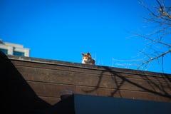 Katze auf der Wand Stockbild
