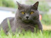 Katze auf der Wiese stockfotos