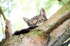 Katze auf einem Baum Lizenzfreie Stockfotografie