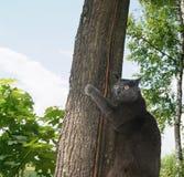 Katze auf einem Baum Stockfotos