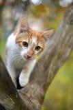 Katze auf einem Baum Stockfoto