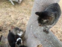 Katze auf einem Baum Stockfotografie