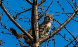 Katze auf einem Baum Stockbilder