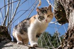 Katze auf einem Baum am sonnigen Tag lizenzfreie stockfotos