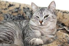 Katze auf einem Bett, ernste Katze zu Hause, lustiges Kätzchen, Porträt der Katze Lizenzfreie Stockbilder