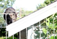 Katze auf einem Dach Stockbild