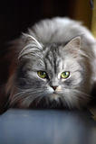 Katze auf einem Fensterrahmen Lizenzfreie Stockfotografie