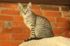 Katze auf einem Kissen mit Ziegelsteinhintergrund Stockfotos