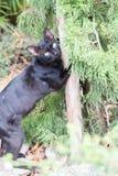 Katze auf einem Pfosten Lizenzfreie Stockfotografie
