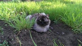 Katze auf einem Rest lizenzfreie stockbilder