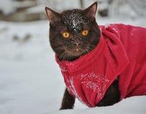 Katze auf einem Weg Stockfoto