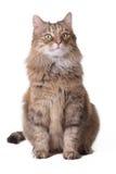 Katze auf einem weißen Hintergrund lizenzfreie stockfotos
