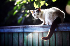 Katze auf einem Zaun Lizenzfreies Stockfoto