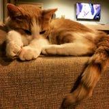 Katze auf einer Couch lizenzfreies stockfoto