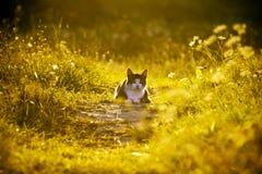 Katze auf einer grünen Wiese. Lizenzfreies Stockbild