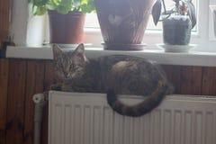 Katze auf einer Heizkörperheizung lizenzfreie stockfotografie