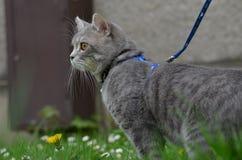 Katze auf einer Leine Lizenzfreie Stockfotos