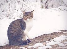 Katze auf einer Schneestraße lizenzfreie stockfotografie