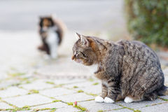 Katze auf einer Straße in der Stadt mit einer anderen Katze auf Hintergrund Lizenzfreie Stockfotografie