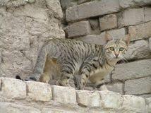 Katze auf einer Wand stockbilder