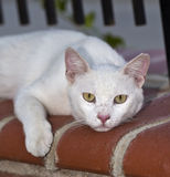 Katze auf einer Wand Lizenzfreie Stockfotos