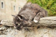Katze auf einer Wand des Hauses lizenzfreie stockfotografie