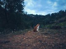 Katze auf einer Weise Stockfotografie