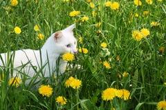 Katze auf einer Wiese lizenzfreie stockbilder