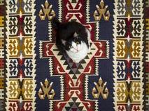 Katze auf einer Wolldecke stockfoto